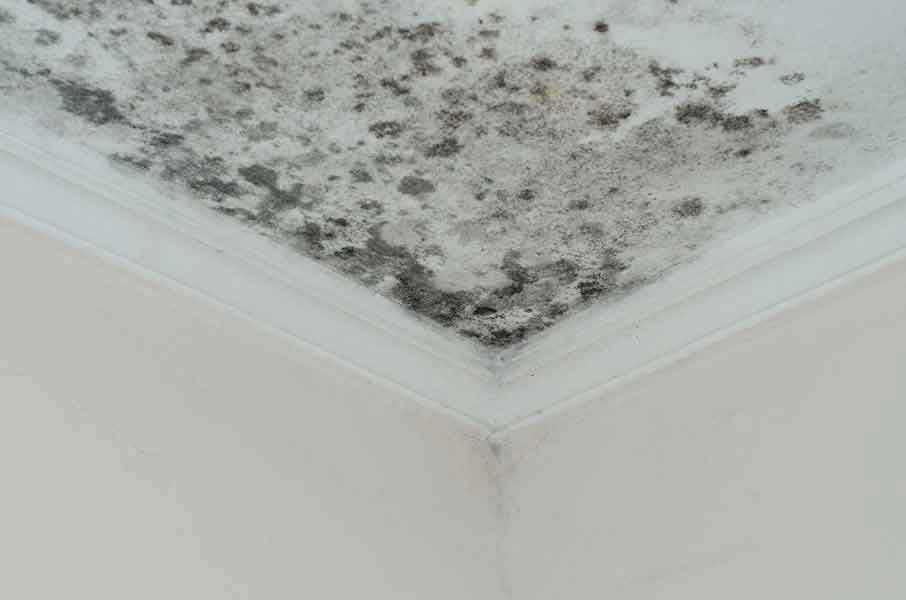 Mold Health Risks