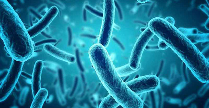 Listeria Disinfection